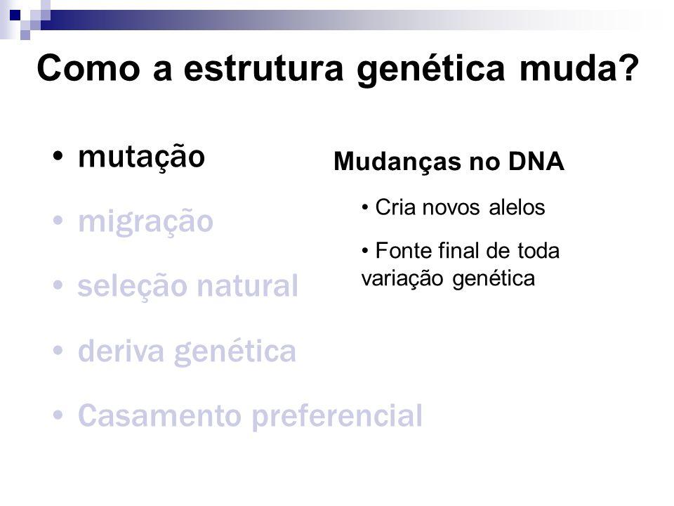 Como a estrutura genética muda