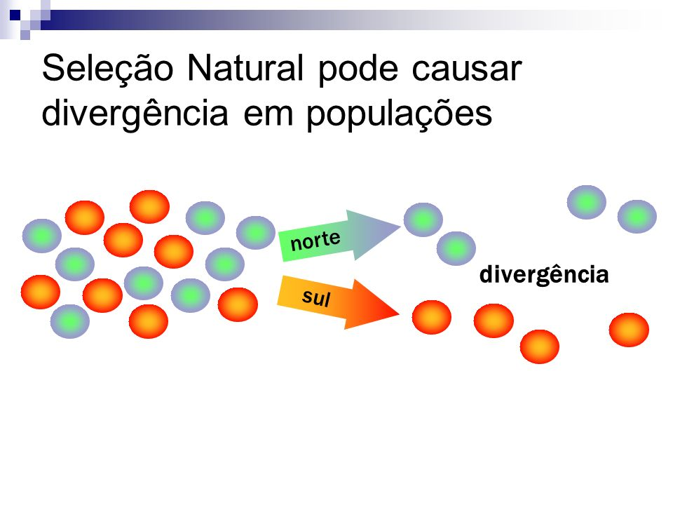 Seleção Natural pode causar divergência em populações