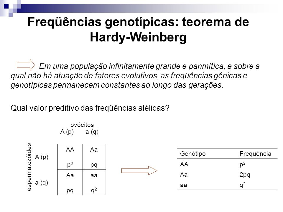 Freqüências genotípicas: teorema de Hardy-Weinberg