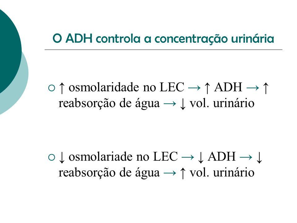 O ADH controla a concentração urinária