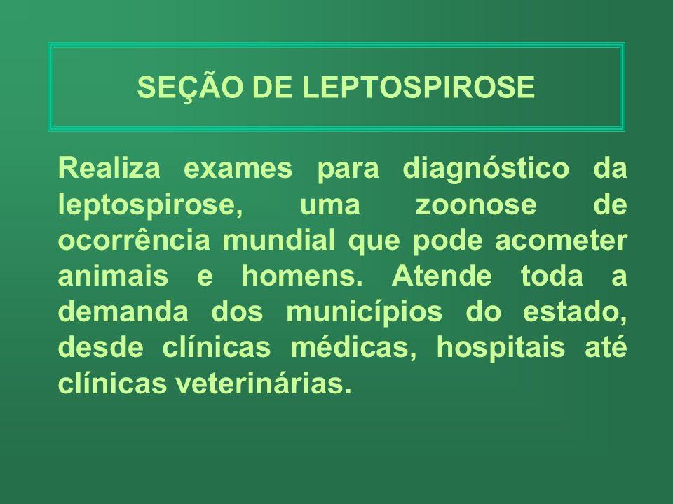SEÇÃO DE LEPTOSPIROSE