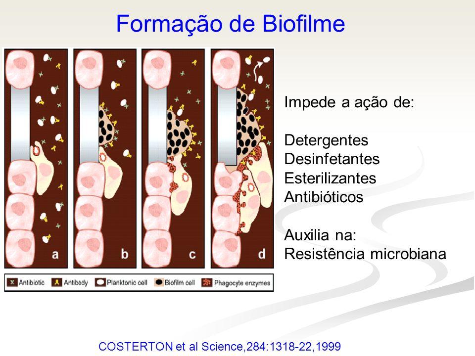 Formação de Biofilme Impede a ação de: Detergentes Desinfetantes