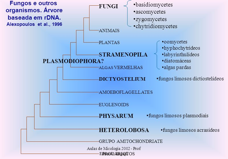 Fungos e outros basidiomycetes organismos. Árvore FUNGI ascomycetes