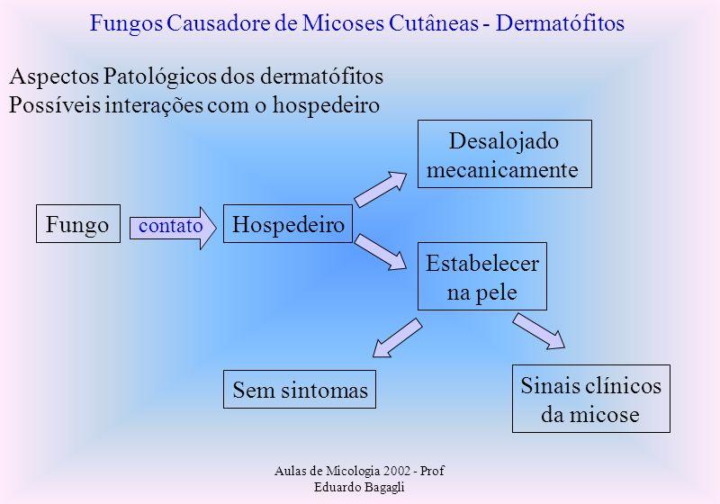 Fungos Causadore de Micoses Cutâneas - Dermatófitos