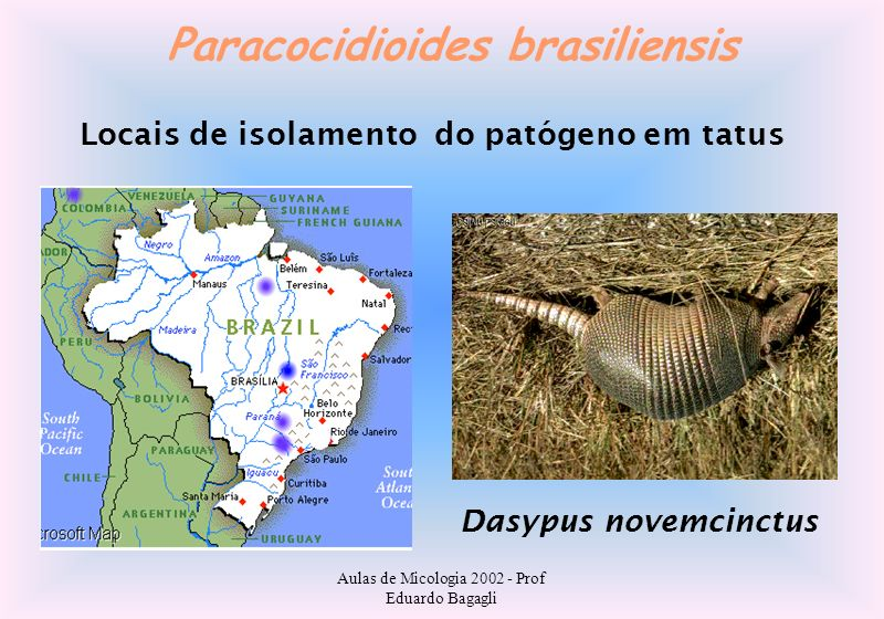 Paracocidioides brasiliensis