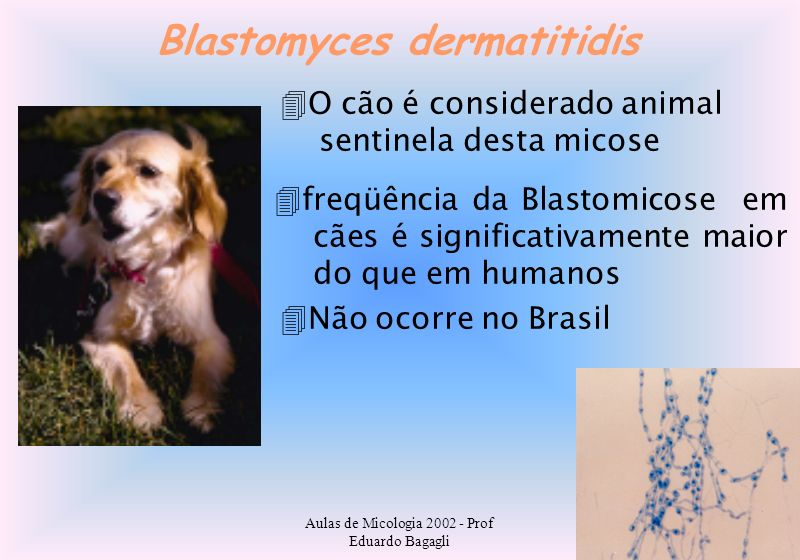Blastomyces dermatitidis