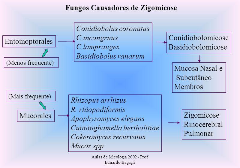 Fungos Causadores de Zigomicose