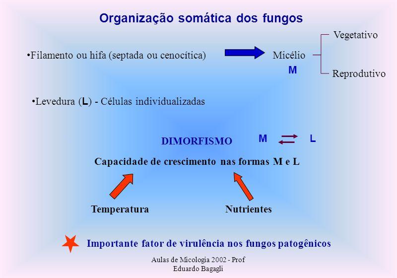 Organização somática dos fungos
