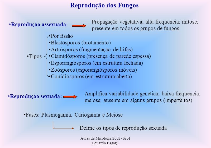 Reprodução dos Fungos Reprodução assexuada: