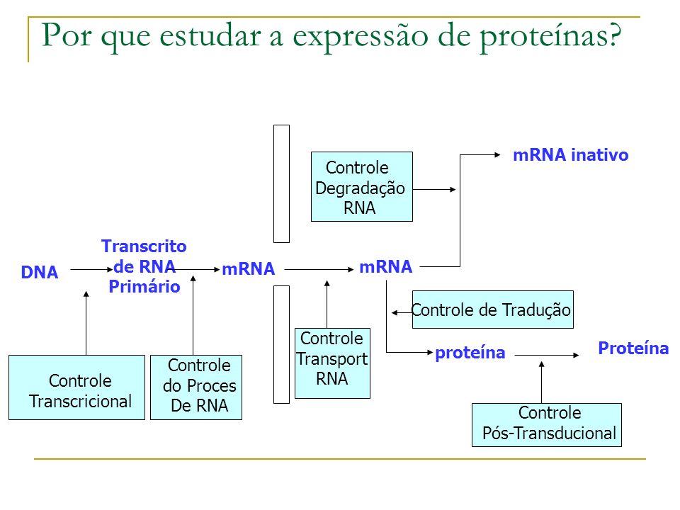 Por que estudar a expressão de proteínas