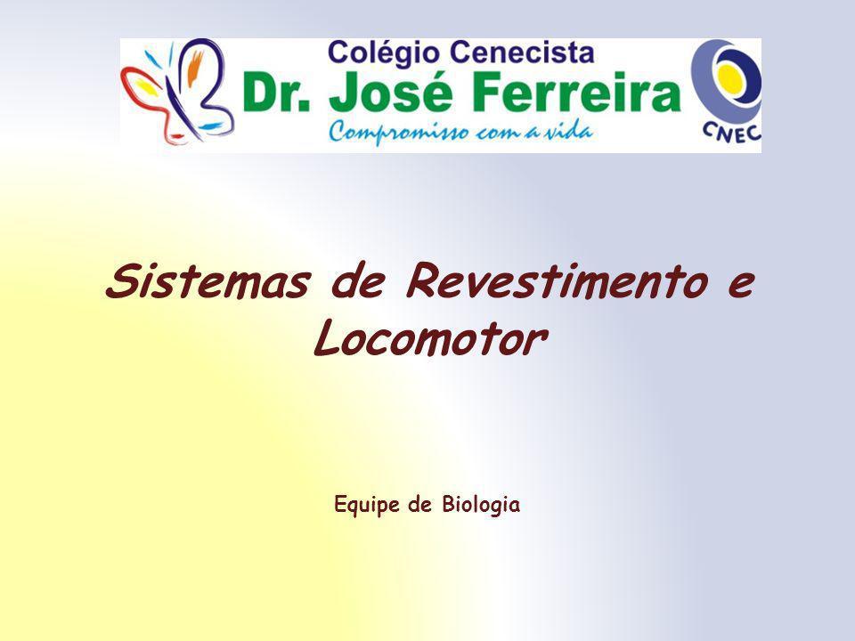 Sistemas de Revestimento e Locomotor