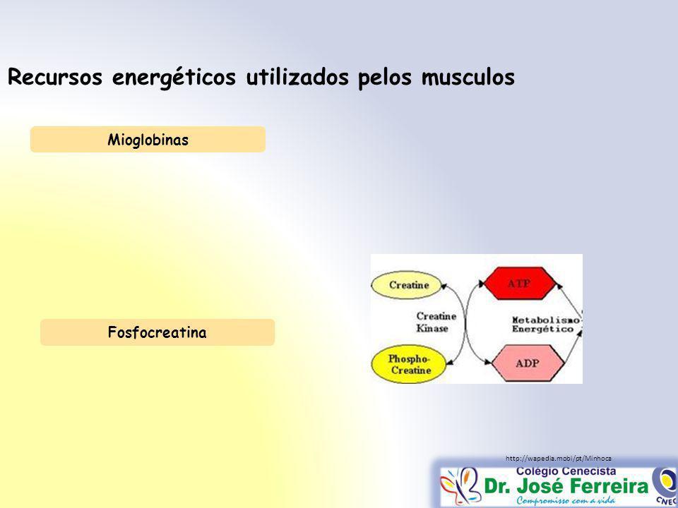 Recursos energéticos utilizados pelos musculos