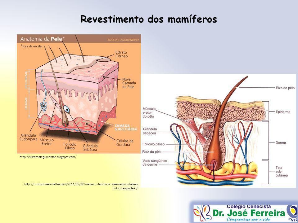 Revestimento dos mamíferos