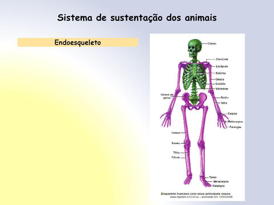 Sistema de sustentação dos animais