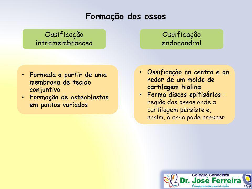 Formação dos ossos Ossificação intramembranosa Ossificação endocondral