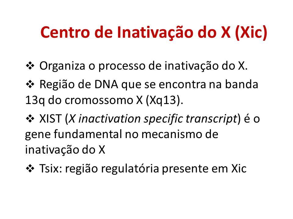 Centro de Inativação do X (Xic)