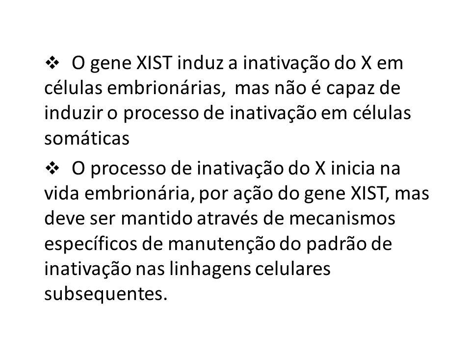 O gene XIST induz a inativação do X em células embrionárias, mas não é capaz de induzir o processo de inativação em células somáticas