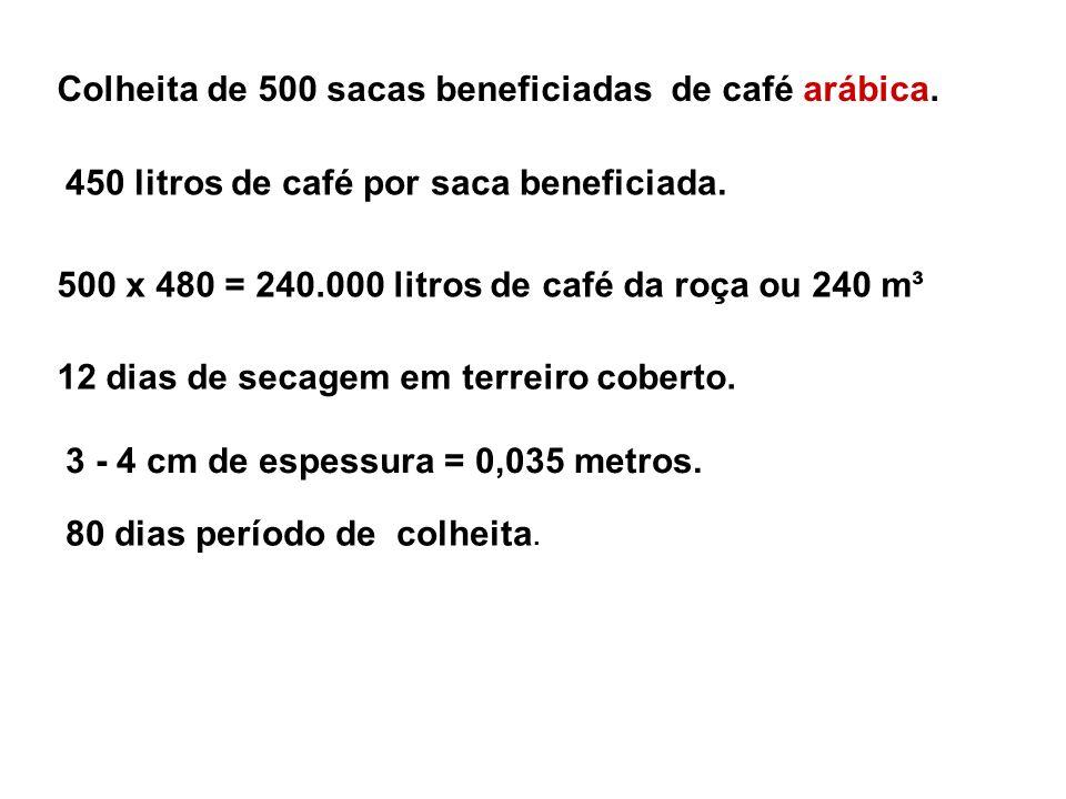Colheita de 500 sacas beneficiadas de café arábica.