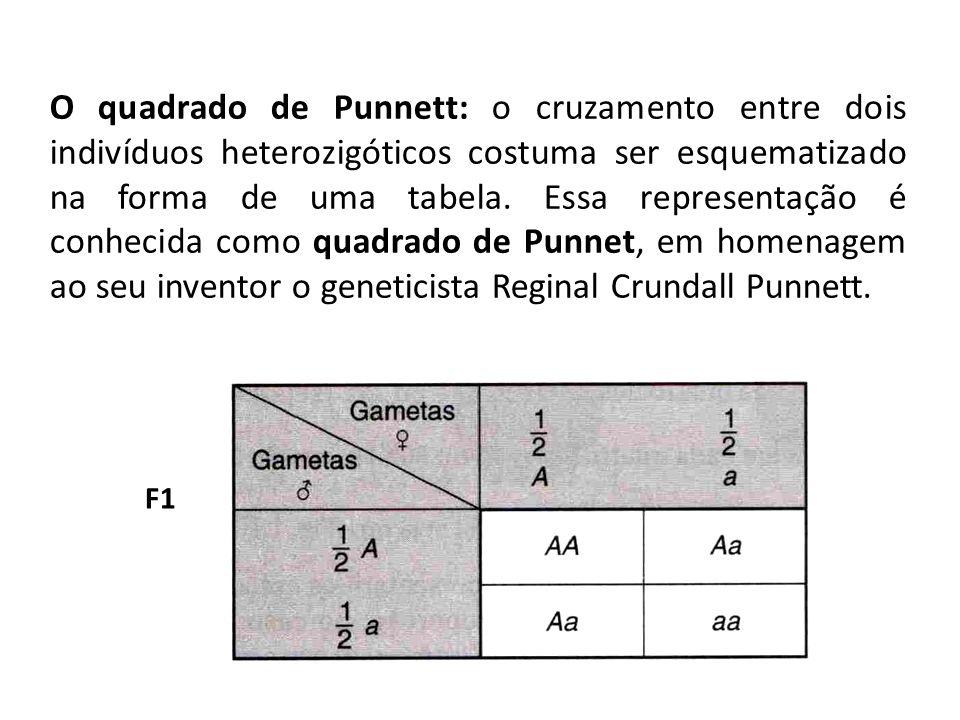 O quadrado de Punnett: o cruzamento entre dois indivíduos heterozigóticos costuma ser esquematizado na forma de uma tabela. Essa representação é conhecida como quadrado de Punnet, em homenagem ao seu inventor o geneticista Reginal Crundall Punnett.