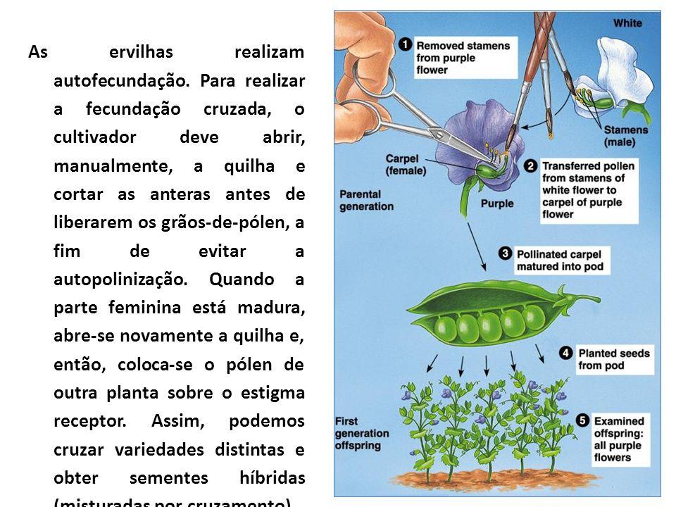 As ervilhas realizam autofecundação