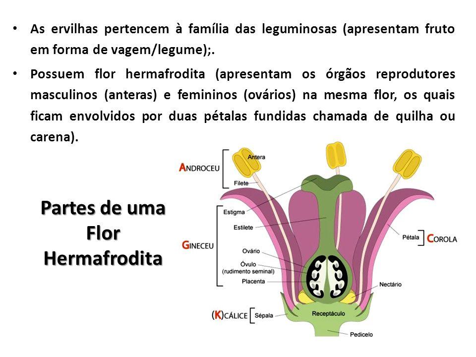 Partes de uma Flor Hermafrodita