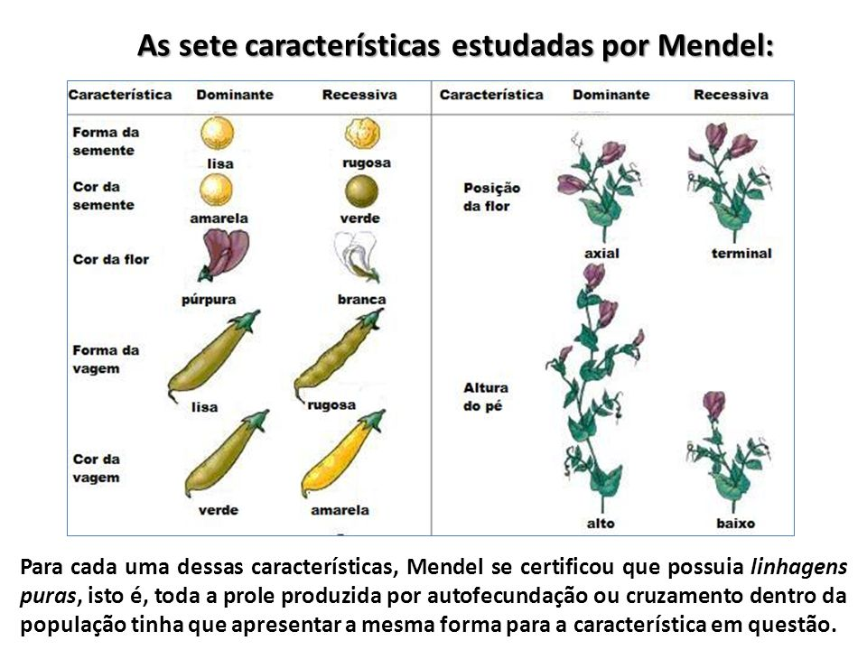 As sete características estudadas por Mendel: