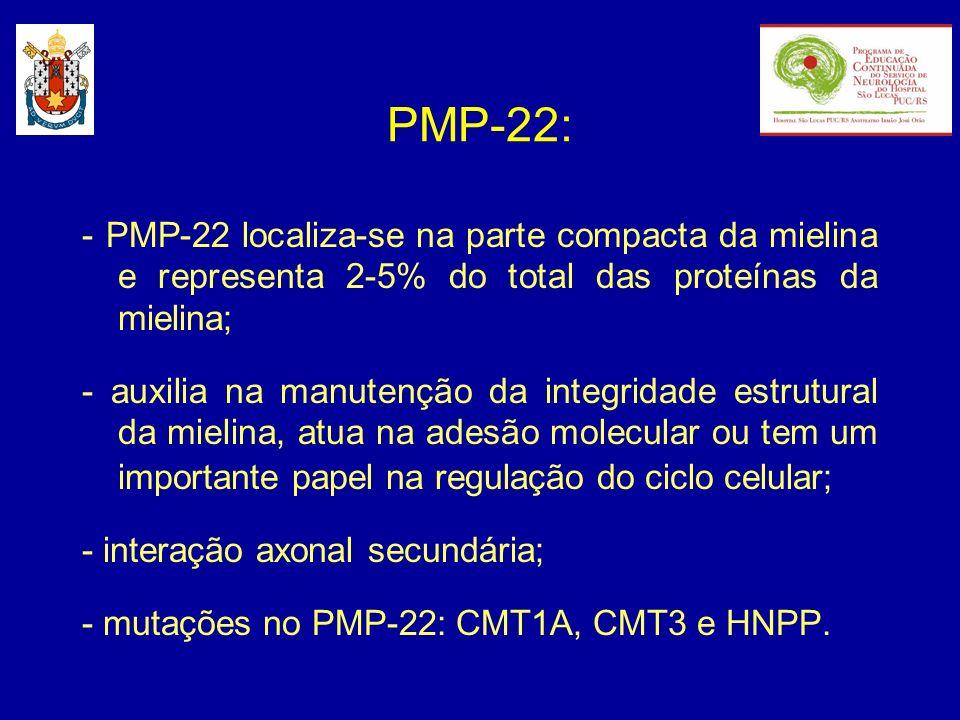PMP-22: - PMP-22 localiza-se na parte compacta da mielina e representa 2-5% do total das proteínas da mielina;