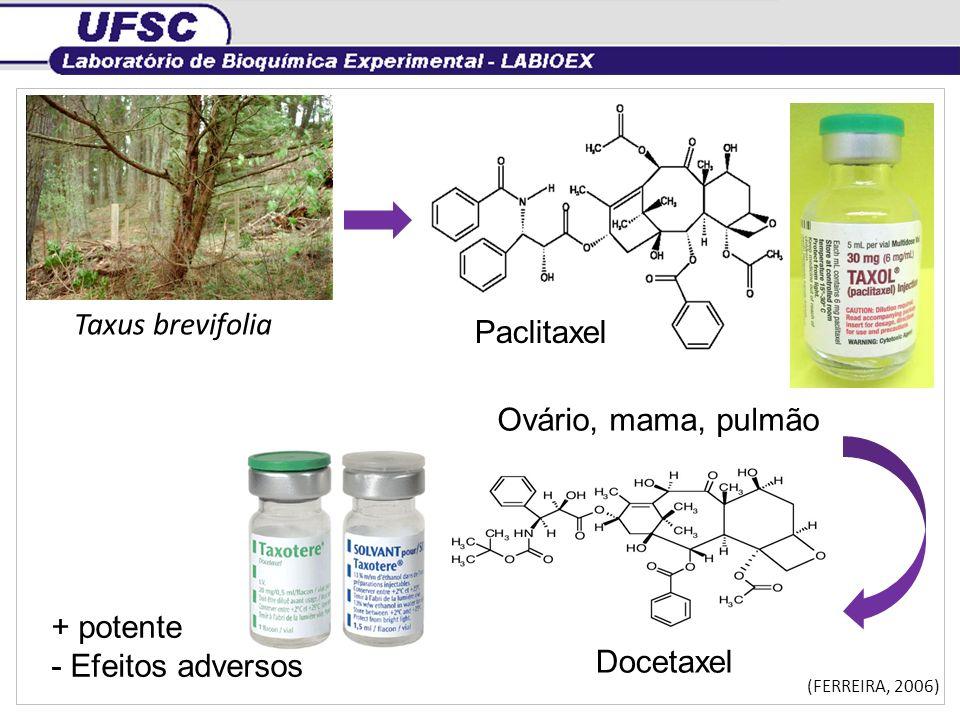 Taxus brevifolia Paclitaxel Ovário, mama, pulmão + potente