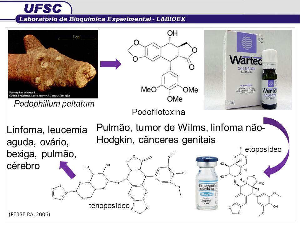 Pulmão, tumor de Wilms, linfoma não-Hodgkin, cânceres genitais