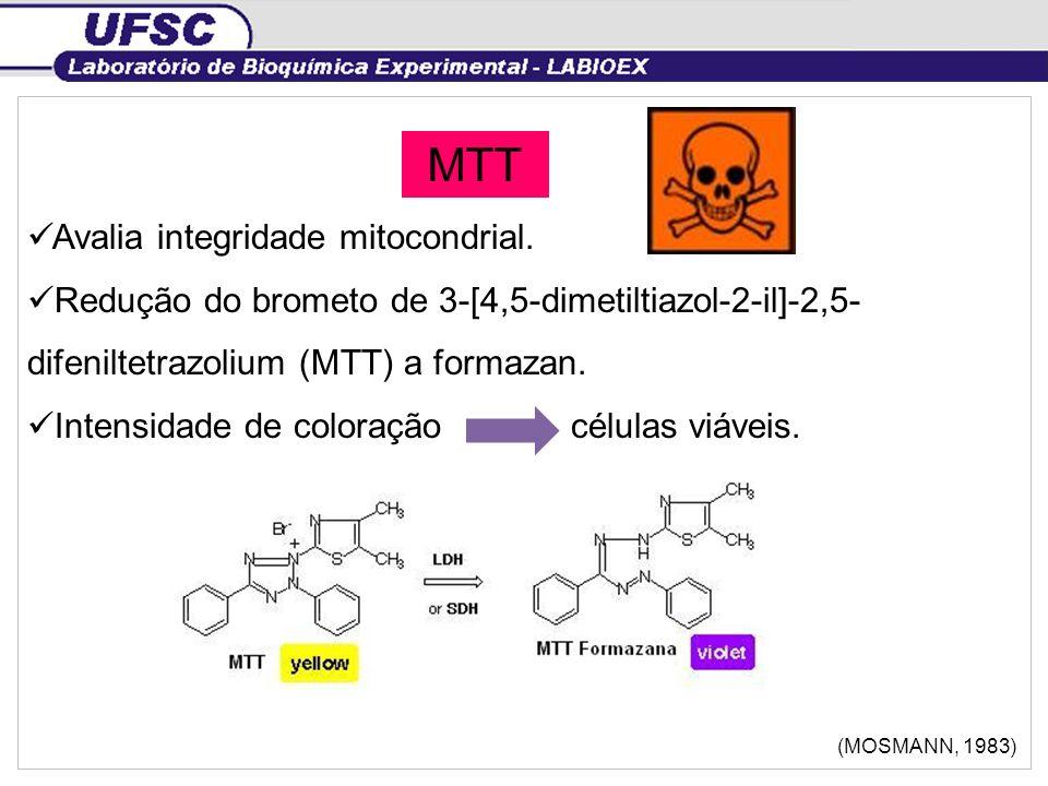MTT Avalia integridade mitocondrial.
