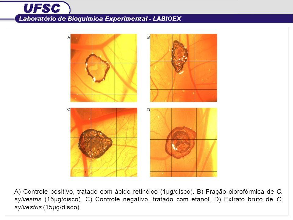 A) Controle positivo, tratado com ácido retinóico (1µg/disco)