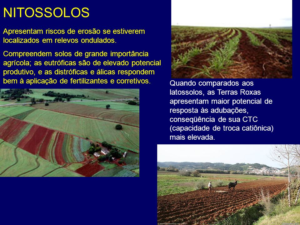 NITOSSOLOS Apresentam riscos de erosão se estiverem localizados em relevos ondulados.
