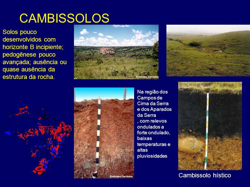 CAMBISSOLOS Solos pouco desenvolvidos com horizonte B incipiente; pedogênese pouco avançada; ausência ou quase ausência da estrutura da rocha.