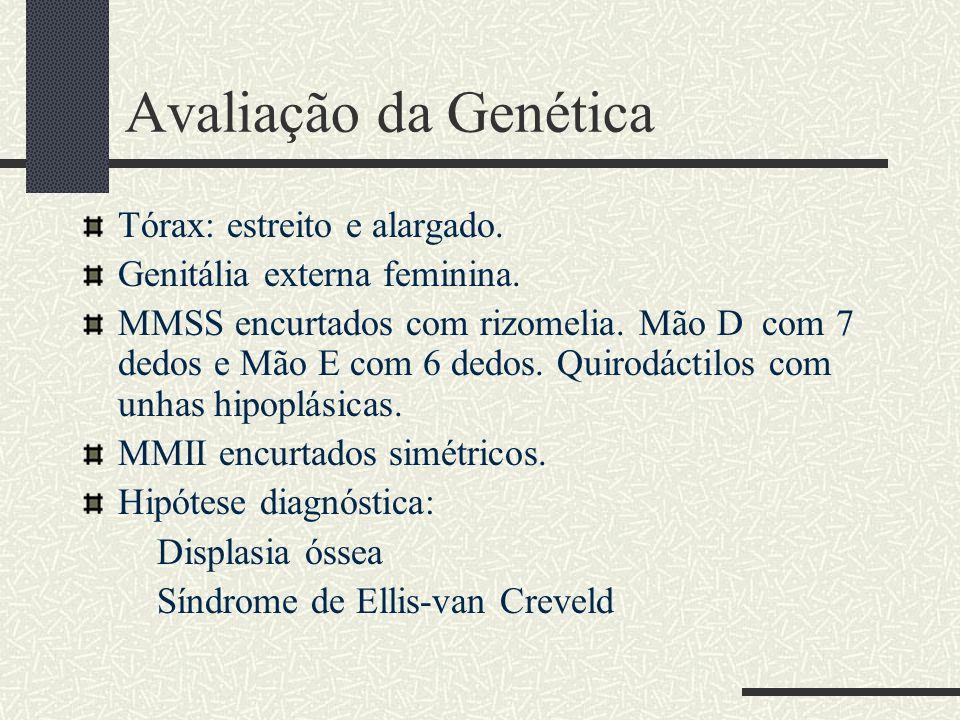 Avaliação da Genética Tórax: estreito e alargado.