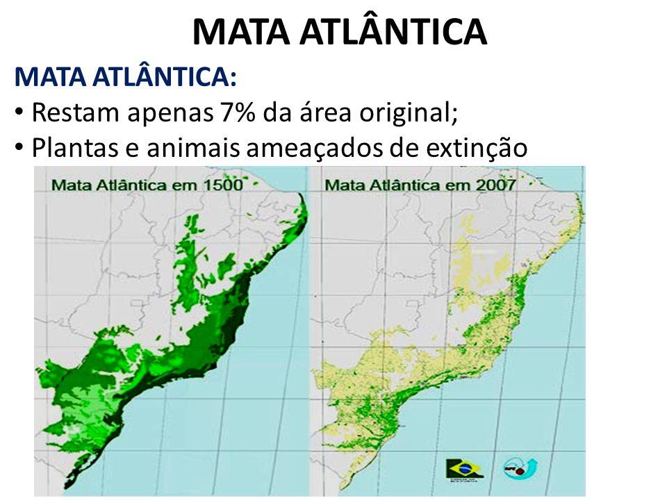 MATA ATLÂNTICA MATA ATLÂNTICA: Restam apenas 7% da área original;