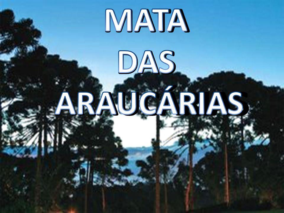 MATA DAS ARAUCÁRIAS