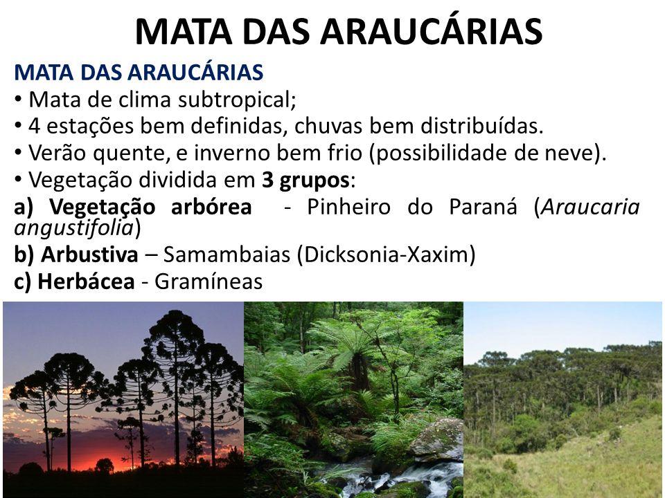 MATA DAS ARAUCÁRIAS MATA DAS ARAUCÁRIAS Mata de clima subtropical;