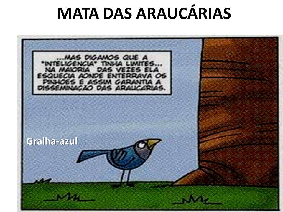 MATA DAS ARAUCÁRIAS Gralha-azul