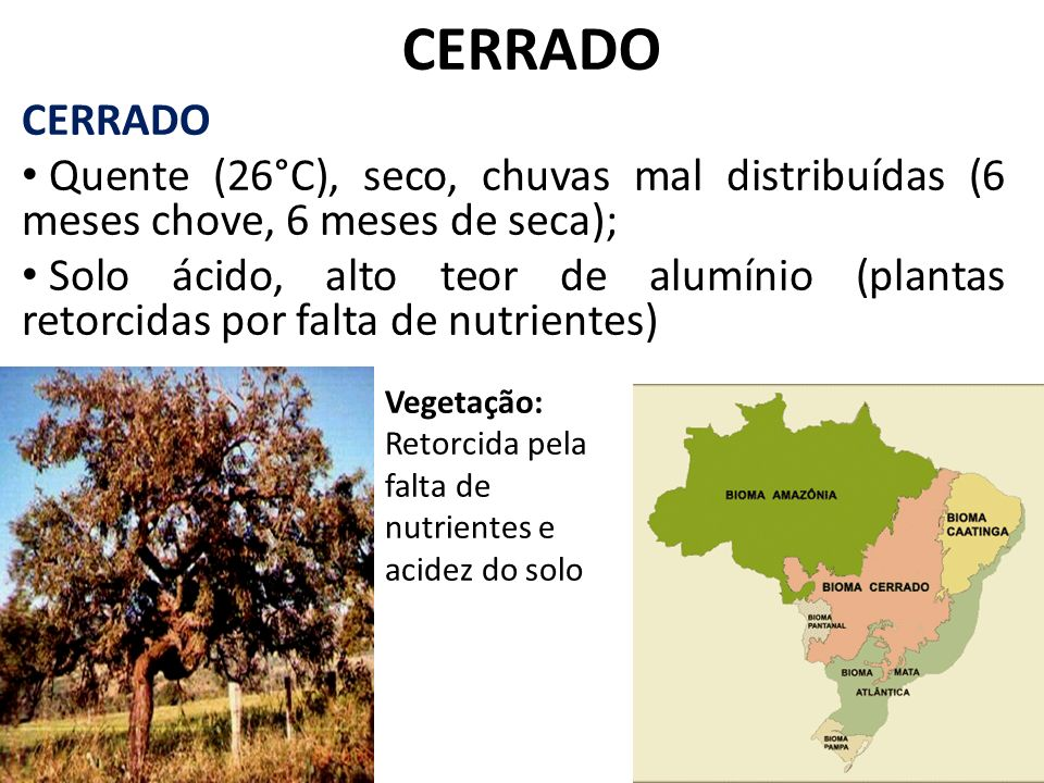 CERRADO CERRADO. Quente (26°C), seco, chuvas mal distribuídas (6 meses chove, 6 meses de seca);