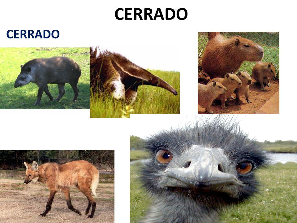 CERRADO CERRADO