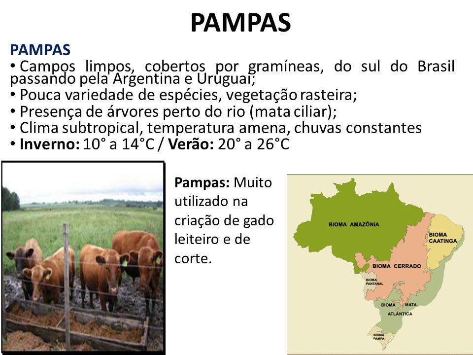 PAMPAS PAMPAS. Campos limpos, cobertos por gramíneas, do sul do Brasil passando pela Argentina e Uruguai;