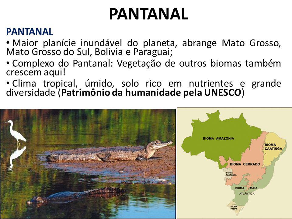 PANTANAL PANTANAL. Maior planície inundável do planeta, abrange Mato Grosso, Mato Grosso do Sul, Bolívia e Paraguai;