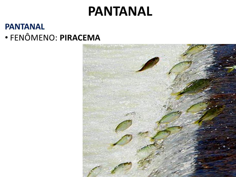 PANTANAL PANTANAL FENÔMENO: PIRACEMA