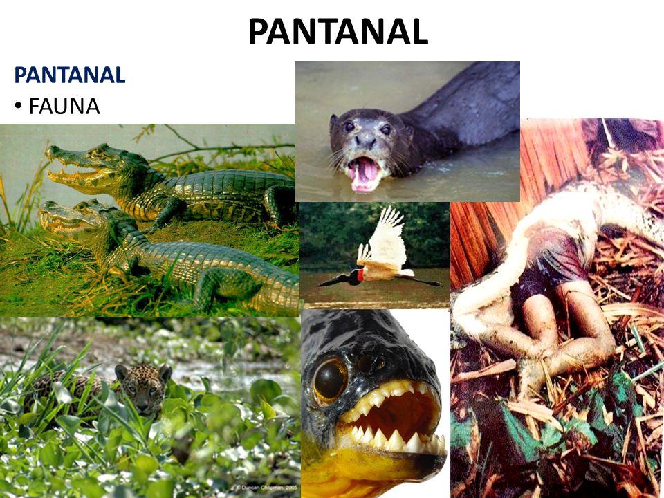 PANTANAL PANTANAL FAUNA