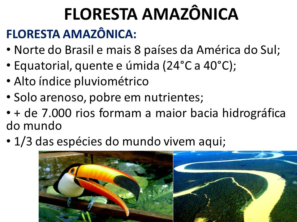 FLORESTA AMAZÔNICA FLORESTA AMAZÔNICA: