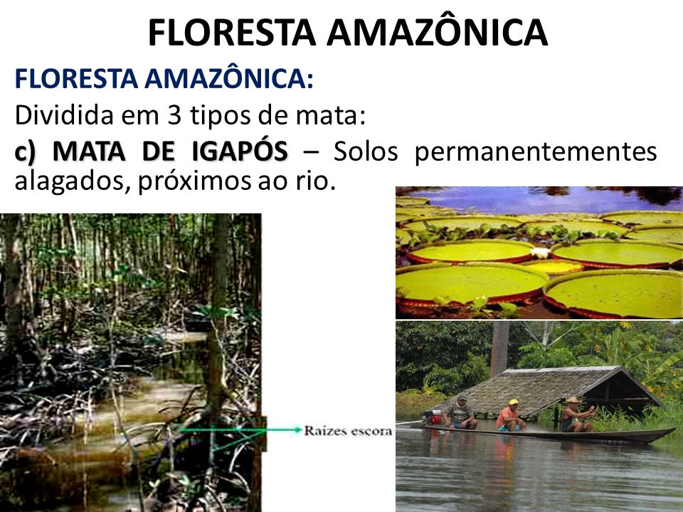 FLORESTA AMAZÔNICA FLORESTA AMAZÔNICA: Dividida em 3 tipos de mata: