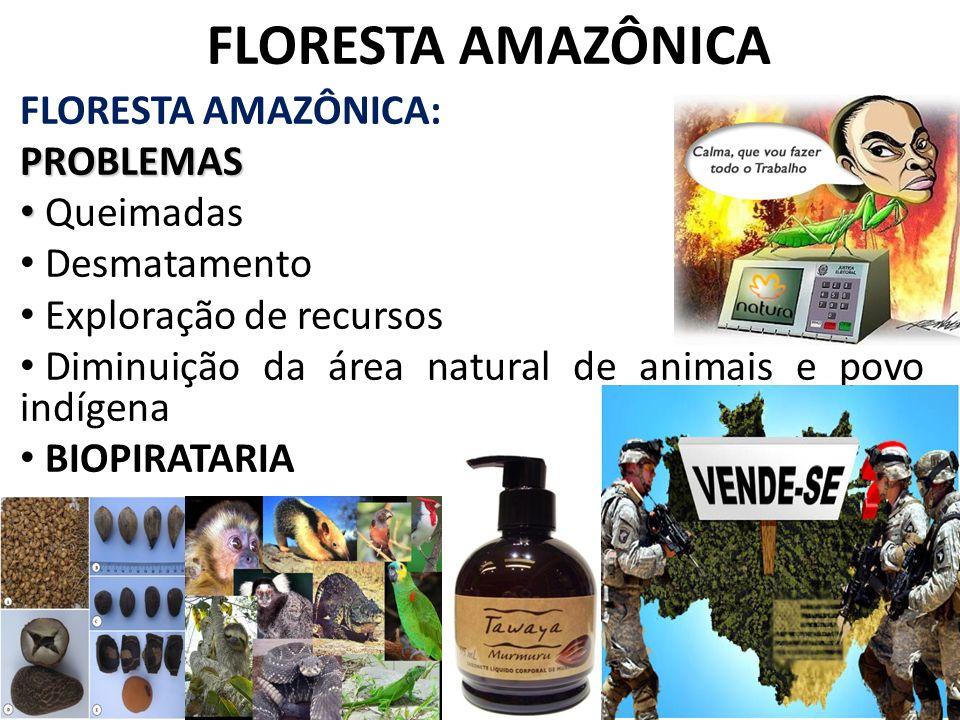 FLORESTA AMAZÔNICA FLORESTA AMAZÔNICA: PROBLEMAS Queimadas