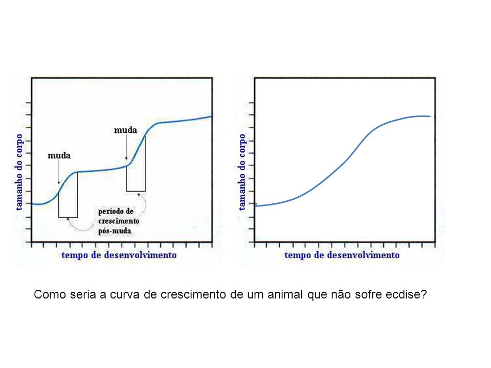 Como seria a curva de crescimento de um animal que não sofre ecdise