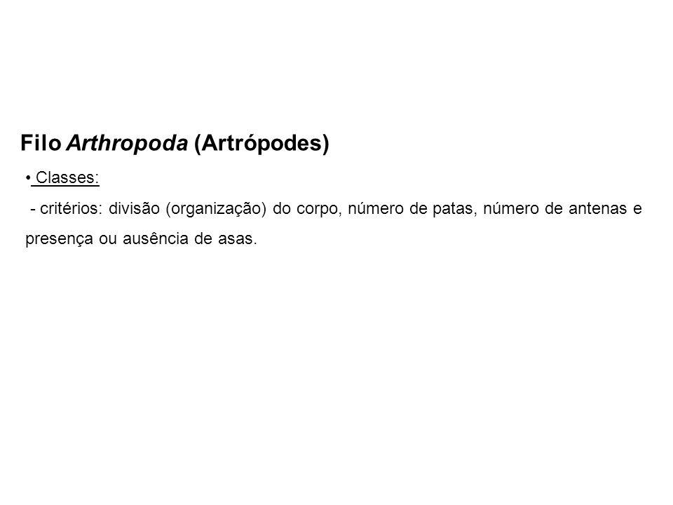 Filo Arthropoda (Artrópodes)