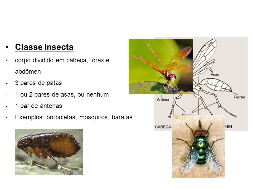 Classe Insecta corpo dividido em cabeça, tórax e abdômen